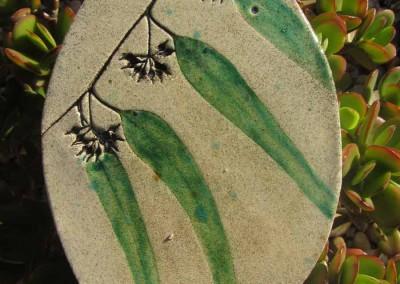 Eucalyptus with seeds